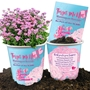 Breast Cancer Awareness Mammogram Reminder Planter Set  Breast Cancer, Awareness, Fundraiser, Giveaway, Mammogram, Reminder, Pink, Forget-Me-Not, Flower, Planter,