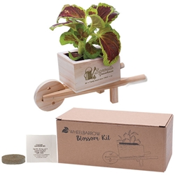 Wooden Wheel Barrow Blossom Kit | Care Promotions